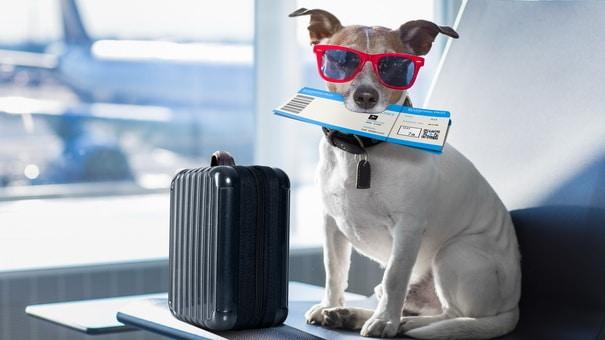 Pet Friendly Travel Plan